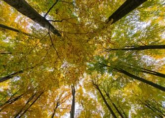 Klimawandel macht niedersächsischen Wäldern zu schaffen
